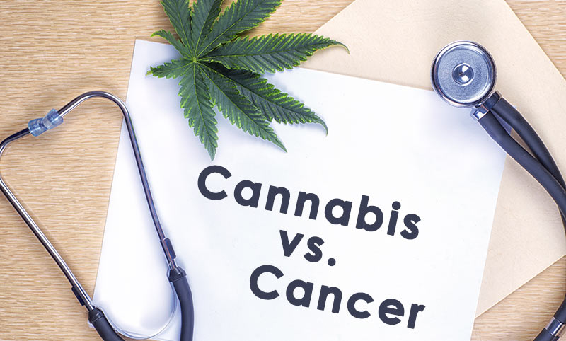 cannabis oil kills cancer